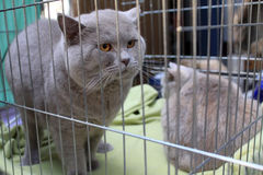 Grey cat in a cage Stock Photography