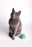 Grey cat contemplating a ball of wool Stock Photography