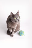 Grey cat contemplating a ball of wool Stock Photos