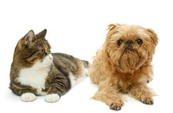 Grey cat and dog lie together Royalty Free Stock Photo