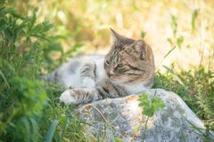 Grey cat is enjoying nature Stock Photo