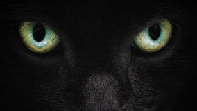 Grey cat face closeup with green eyes Royalty Free Stock Image