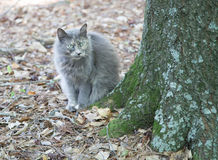 Grey Cat in the Fall Foliage Stock Photo