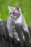 Grey cat on the fence Royalty Free Stock Photo