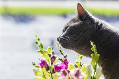 Grey cat and flowers in sunlight Stock Photo