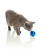 Grey cat with a fur-tree toy Stock Photos