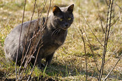 Grey cat in the grass. Stock Photography