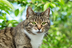 Grey cat with green eyes. On green background stock images