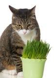 Grey cat and green grass Stock Photos