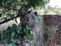 Grey cat. With green eyes over the wall stock image