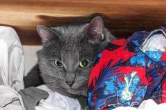 Grey cat hid on shelf Stock Photo