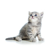 Grey cat kitten looking up Stock Images