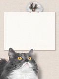 Grey cat look on white hamster Royalty Free Stock Image
