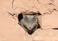 Grey cat looking through a hole in a mud wall Royalty Free Stock Image
