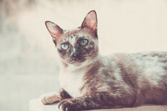 Grey cat looking to wonder. Royalty Free Stock Photos
