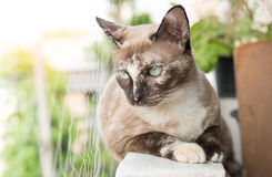 Grey cat looking to wonder. Royalty Free Stock Photography