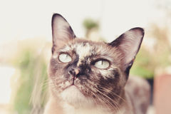 Grey cat looking to wonder. Royalty Free Stock Image