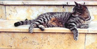 Grey Cat Lying in Marble Stairway Royalty Free Stock Photo