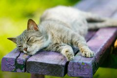 Grey cat lying on old wooden bench royalty free stock photos