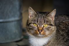 Grey cat outdoor portrait in a fantastic light Royalty Free Stock Image