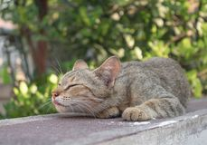 Grey cat  with pitiable sad eyes Stock Photography