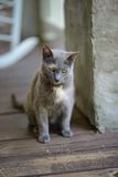 Grey cat on porch Royalty Free Stock Images