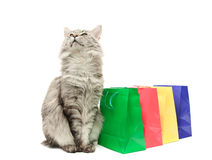 Grey cat with purchases Royalty Free Stock Images