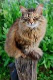 Grey Cat satisfecha que se sienta en la madera en el fondo de la hierba foto de archivo