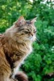 Grey Cat satisfecha que se sienta en la madera en el fondo de la hierba Fotos de archivo libres de regalías