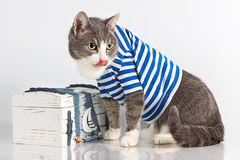 Grey cat in seaman suit on background with chest Stock Photography