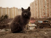 Grey cat and shanty and modern city residental background Stock Photo