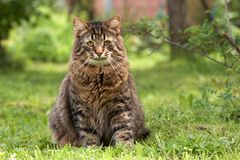 Grey cat sits in a grass Stock Photography