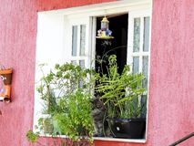 Grey Cat Sitting in an Open Window Covered by Plants in Ille Grande, Brazil, South America Stock Photography