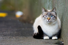 Grey cat sitting on the pavement. and it is snowing outside. cat in the snow Stock Images