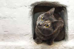 Grey cat sitting in recess of the stove. Grey cat sitting in the recess of the stove royalty free stock images