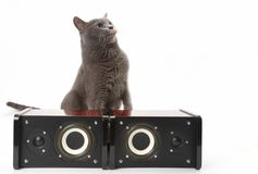 Grey cat sitting with two stereo audio speakers on white backgro Royalty Free Stock Images