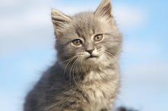 Grey cat on sky. Small grey cat on sky background stock photo