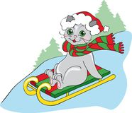 Grey cat on sledge Stock Images