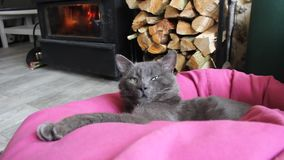 Cat sleeping near fireplace stock footage