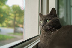 Grey cat sleeping on the window Royalty Free Stock Photo