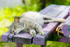 Grey cat sleeping on wooden bench close-up stock images
