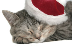 The grey cat sleeps. In a New Year's cap Stock Photo