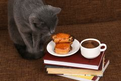 Grey cat smells the rolls with poppy seeds and white Cup of blac. The grey cat smells the rolls with poppy seeds and white Cup of black coffee Royalty Free Stock Photo