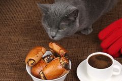 Grey cat smells the rolls with poppy seeds and white Cup of blac. The grey cat smells the rolls with poppy seeds and white Cup of black coffee Royalty Free Stock Images