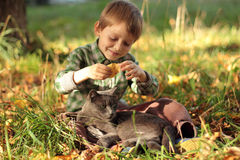 Grey Cat and smiling Boy sitting on the grass. Kid playing with cat. royalty free stock photos