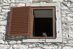 Grey cat standing on a window stock image
