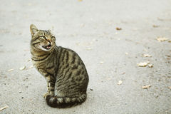 Grey cat on the street Royalty Free Stock Images