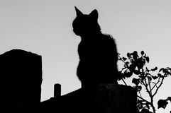 Grey cat with stripes. A grey cat with stripes on a roof Royalty Free Stock Photos