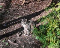 Grey cat in sunny rays royalty free stock photo