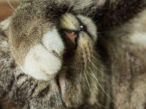 Grey Cat Take Cover royaltyfri fotografi